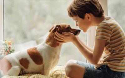 Die chronische Bronchitis beim Hund
