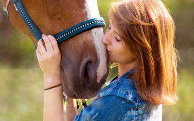 COB – Die chronische Bronchitis bei Pferden
