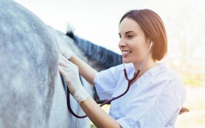 Was bedeutet Dämpfigkeit bei Pferden?